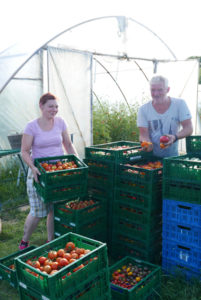 Ein eingespieltes Team. Horst Siegeris mit Denise bei der Tomatenernte. Für die über 100 raren Sorten braucht es das Fachwissen der beiden Gartenfachbauern.
