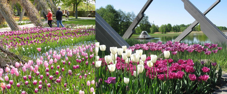 Ostern und Tulpenzauber in Berlins Parks – BerlinFaces Katalog