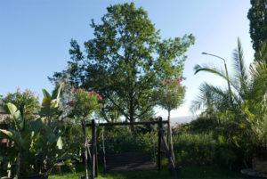 Baum der Zukunft, Späth ERle, Arboretum Späth