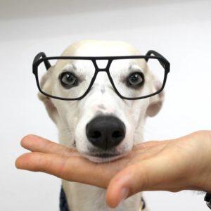 Elliot_Frame Punk Dog_Foto Frame Punk