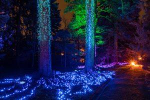 christmas-garden-berlin-19-fireworktrees-e1573903999320